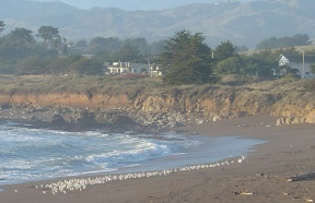 Moonstone Bay surf and cliffs with white birds on shore.jpg