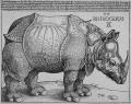rhino durer.jpg