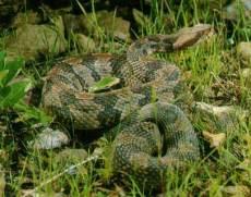 snake-in-the-grass.jpg