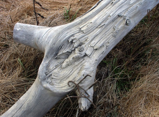 driftwood-on-san-simeon-beach.jpg