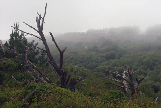 san-simeon-tree-stumps-in-fog.jpg
