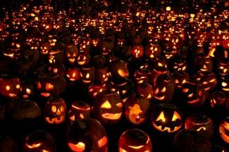 pumpkins-galore.jpg
